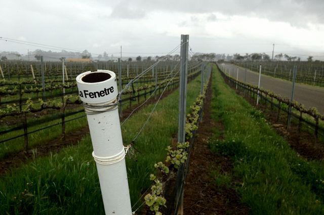 Vineyard sources la fenetre wines timbre winery for La fenetre wine