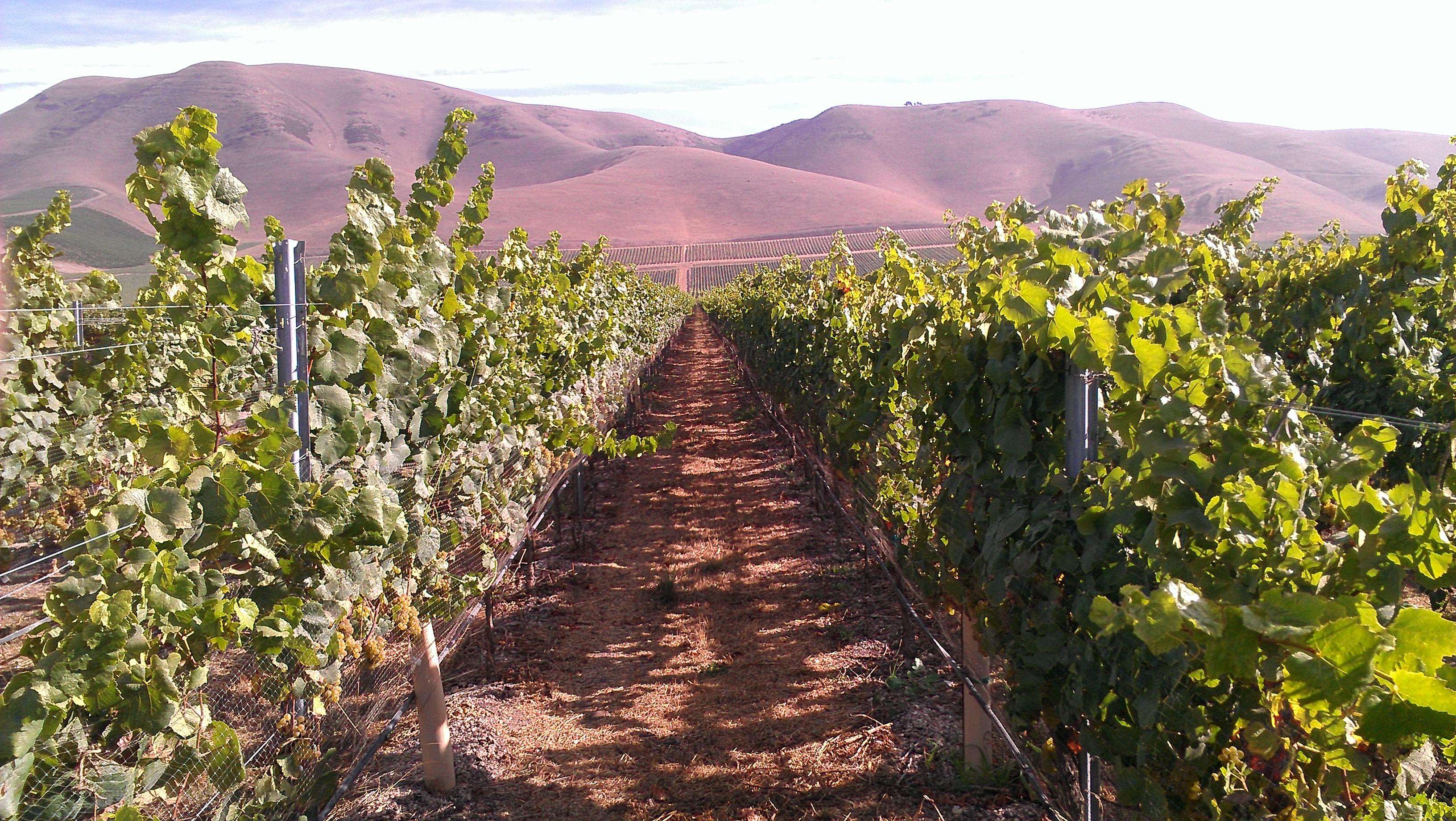 Vineyard sources la fenetre wines timbre winery for La fenetre wines